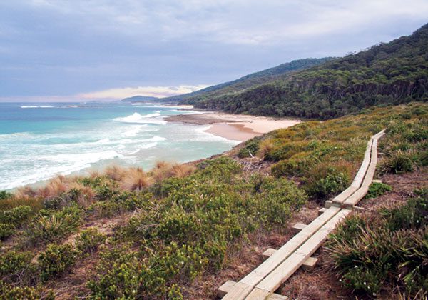 Bushwalk South Coast of NSW
